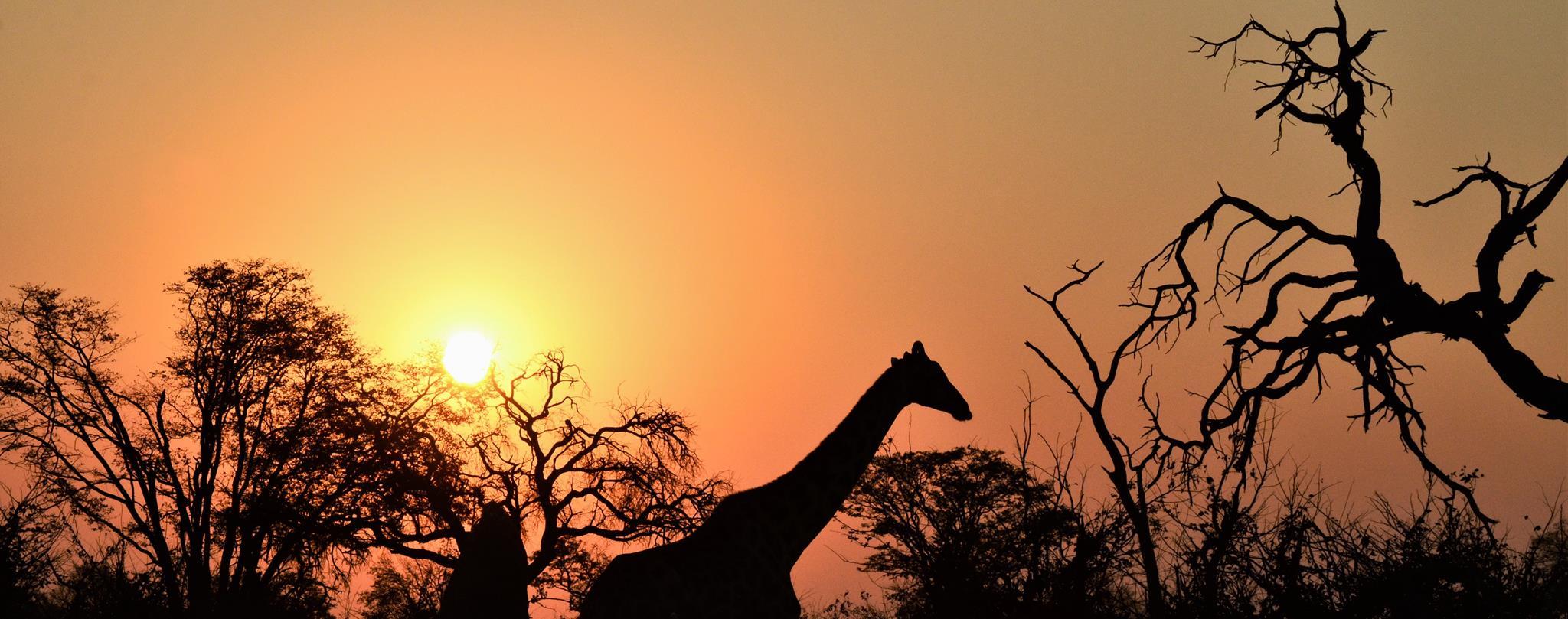 Botswana, dyreliv, elefanter, løver, leoparder