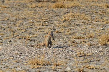 6. Central Kalahari Game Reserve (218)