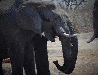 1. Chobe National Park 1 (46)