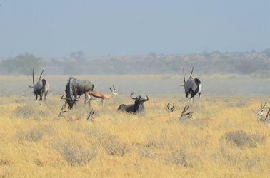 6. Central Kalahari Game Reserve (90)
