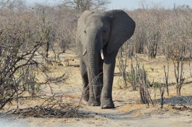 7. Makgagikgadi National Park 1 (86)
