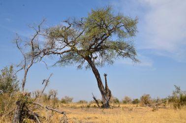 1. Chobe National Park (47)