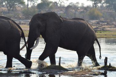7. Makgadikgadi Pans National Park (132)
