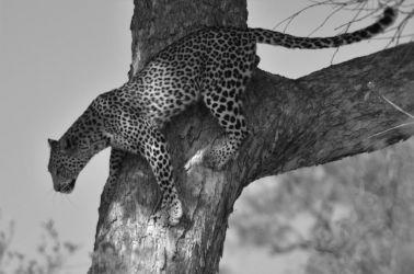 1. Chobe National Park 1 (23)