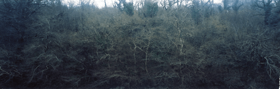 Richard Billingham, Untitled