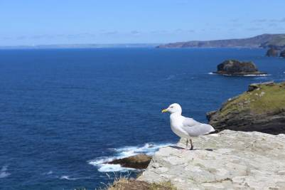 Aves Inglaterra Fauna