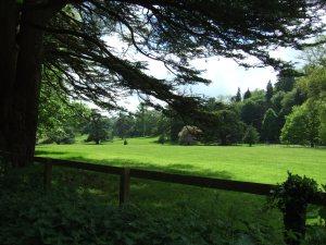 Parkland in Fonthill Estate.