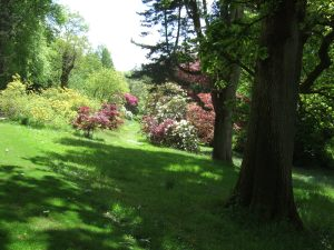 Gaudy rhododendrons and azaleas among the acers and other trees.