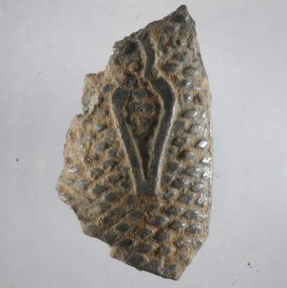 Fingerhut Fragment