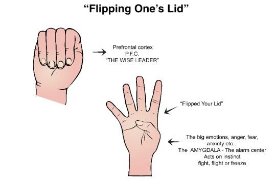 flipped-lid-