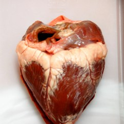 Realistic Heart Diagram 220v Welder Plug Wiring Real Human Hearts Cake Ideas And Designs
