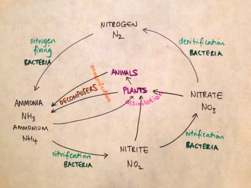 small resolution of nitrogen cycle with molecular modelling