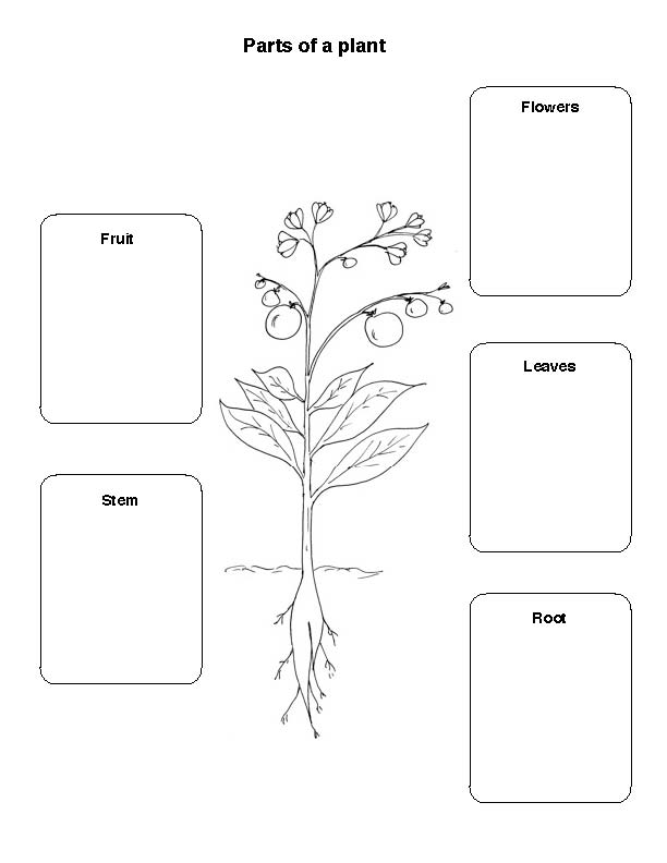 Parts Of A Plant Worksheet For First Grade