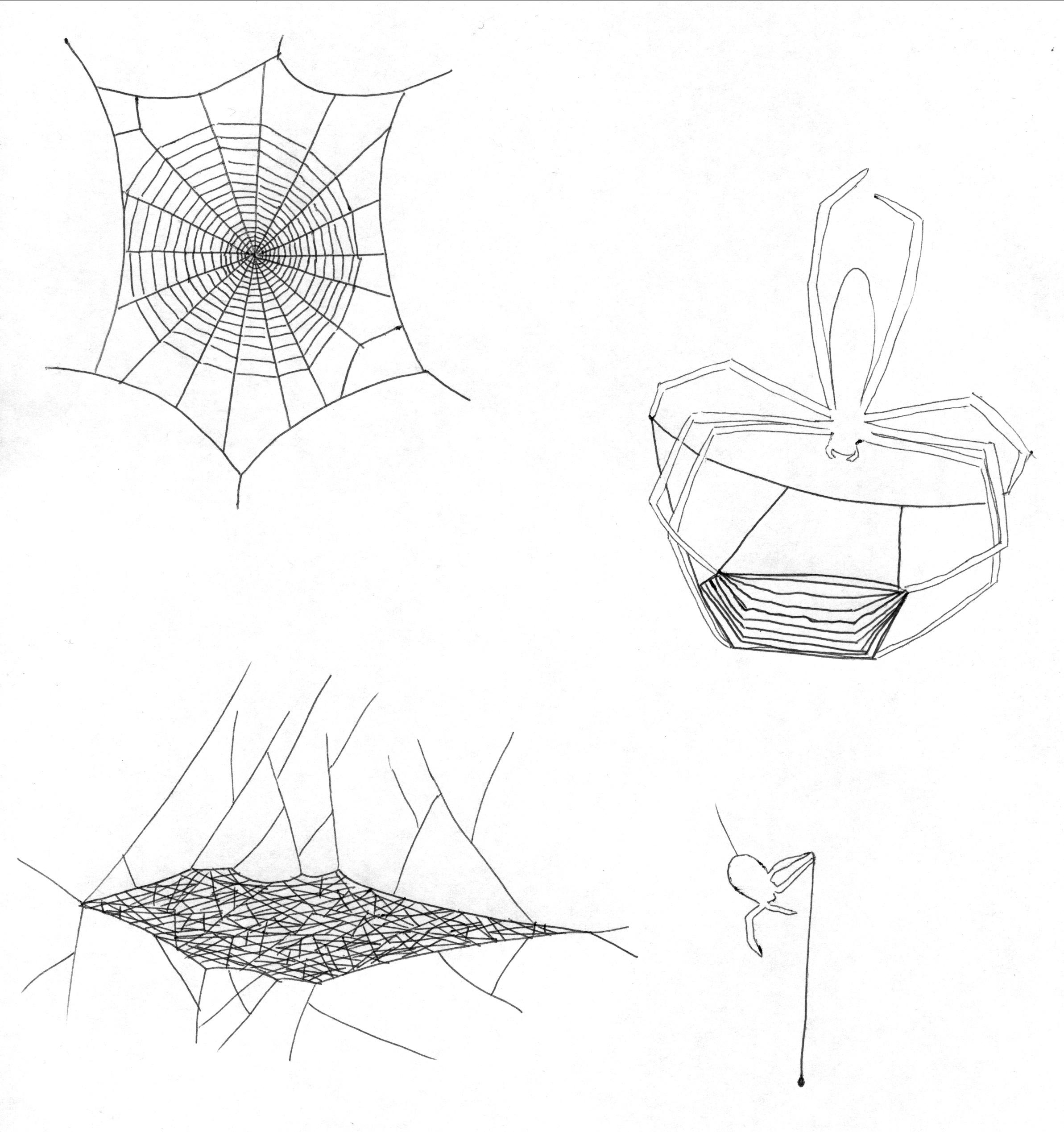 Spider Web Shapes