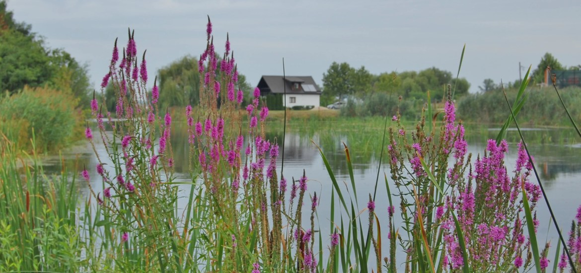 Best Day trips from Bucharest | Comana Park