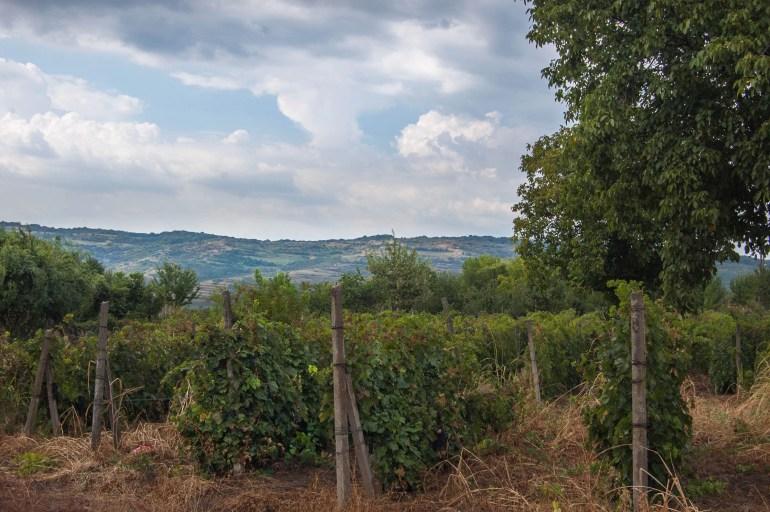 Romania Wine Road Prahova