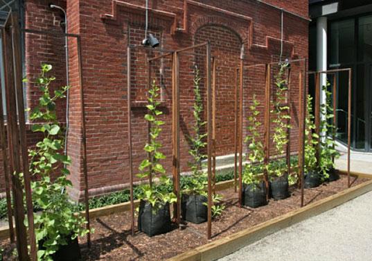 sustainable agriculture, Sharecropper, Leah Gauthier, environmental art NYC, eco art NYC, micro-farming, microfarming, heirloom seeds, organic gardening, seed sharing urban greening, seed saving, public art NYC