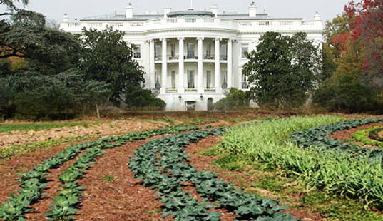 White house garden, michelle obama garden, obama edible garden, urban farming, edible gardening