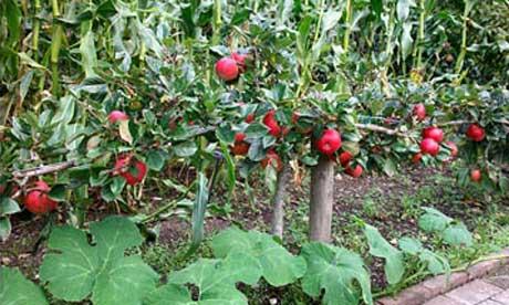 A Few Gardening Ideas For Those Who Love It Inhabit Blog