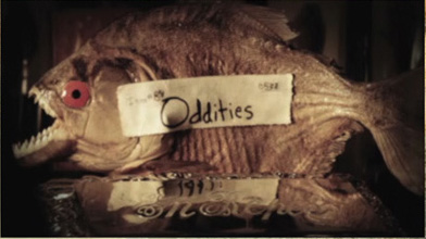 Discover(y) The Oddities