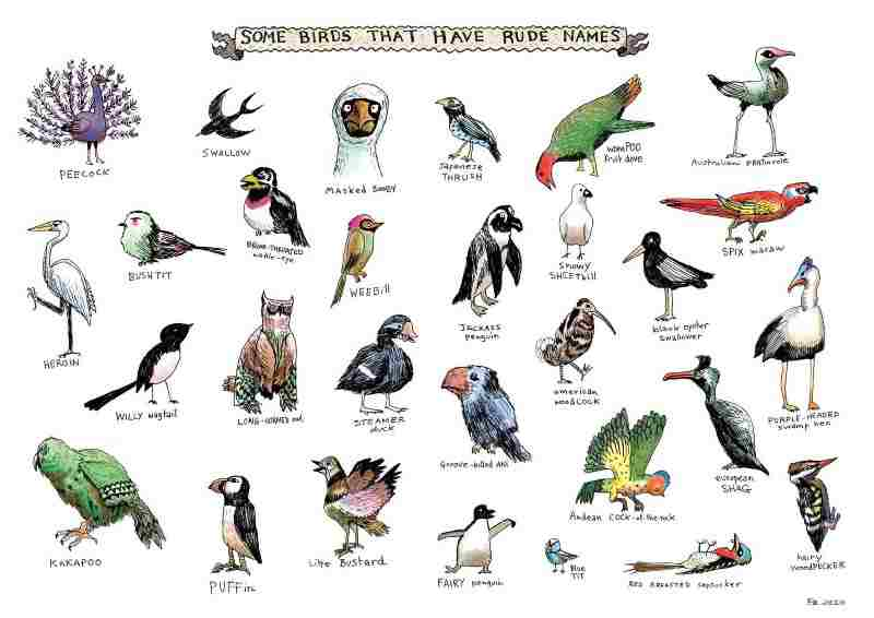 birds name with pictures hindi and english