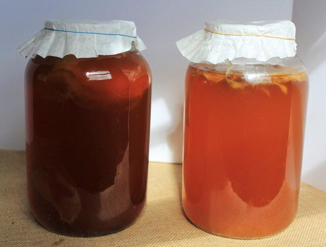 kombucha-first-stage