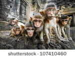 Monkeys-pixabay.com