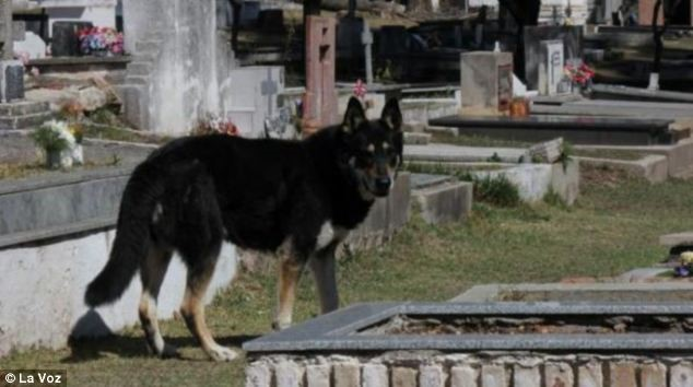 A FAITHFUL dog has refused to move from his master's grave for SIX YEARS, a family claims