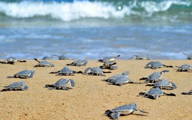 Χρονιά ρεκόρ το 2018 για τη Ζάκυνθο σε φωλιές θαλάσσιας χελώνας ...