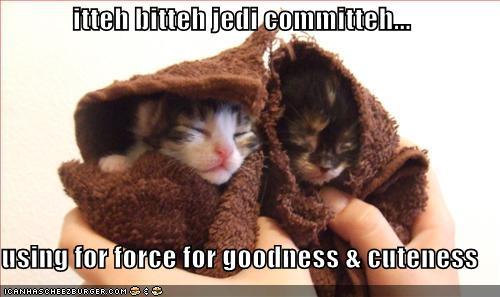 jedi-kittens