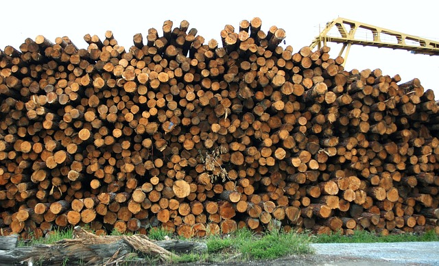 Burning Wood In Stead of Coal to Produce Electricity!