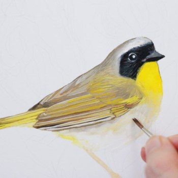Gouache and Watercolor Bird Painting Tutorial: Adding details