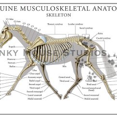 Diagram Parts Of A Horse Single Phase Contactor Wiring Equine Skeletal System Poster