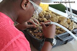 Laboratorio didattico del piccolo paleontologo