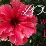 Love will not fail