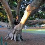 Climbing a Fig Tree
