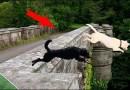 कुत्र्यांच्या आत्महत्येसाठी कुप्रसिद्ध असलेला 'रहस्यमयी पूल'!