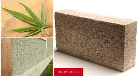 Hempcrete: Cannabis Sativa's architectural application