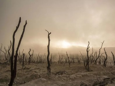 Resultado de imagen para crisis climatica colapso