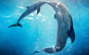 Dolphin-Help