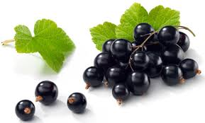 blackcurrants and sirtuin