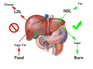 Metabolismiver