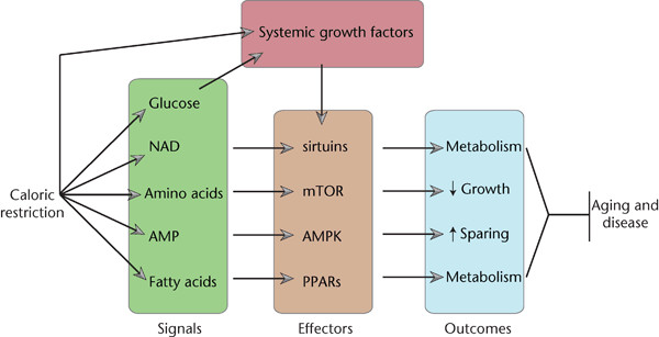metabolic-reprogramming