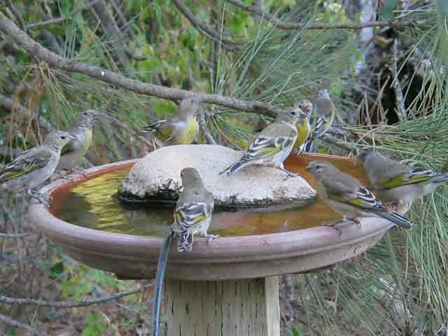 Lessons From A Bird Bath Innercomm Group