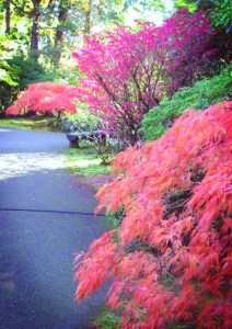 photo 2007 by me. Portland Japanese Gardens