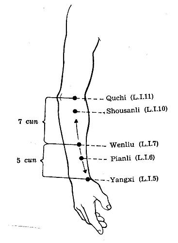 Large Intestine Channel