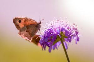 butterfly-1655190_1280