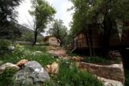 Cabins-in-garden-environment