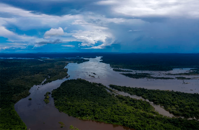 Restoring forests like the Amazon rainforest