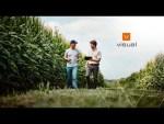 Jornada de Inteligencia Artificial en Agricultura - Universitat de València